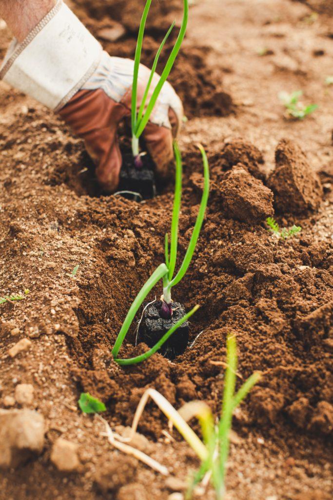Solidarité avec l'agriculture !